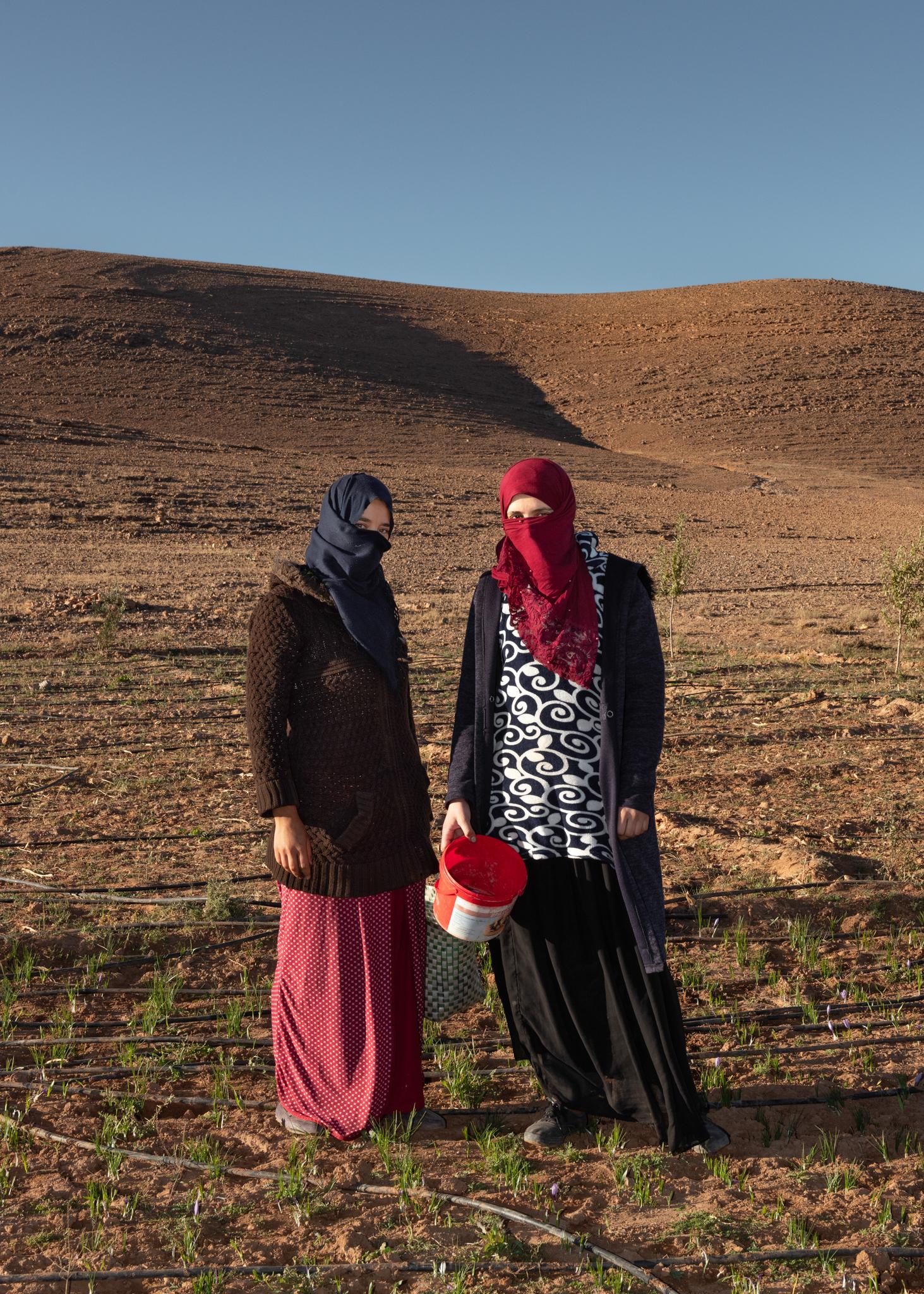 Deux jeunes femmes berbères récoltent les fleurs de safran tôt le matin, dans les environs de Taliouine - pour enRoute, novembre 2019